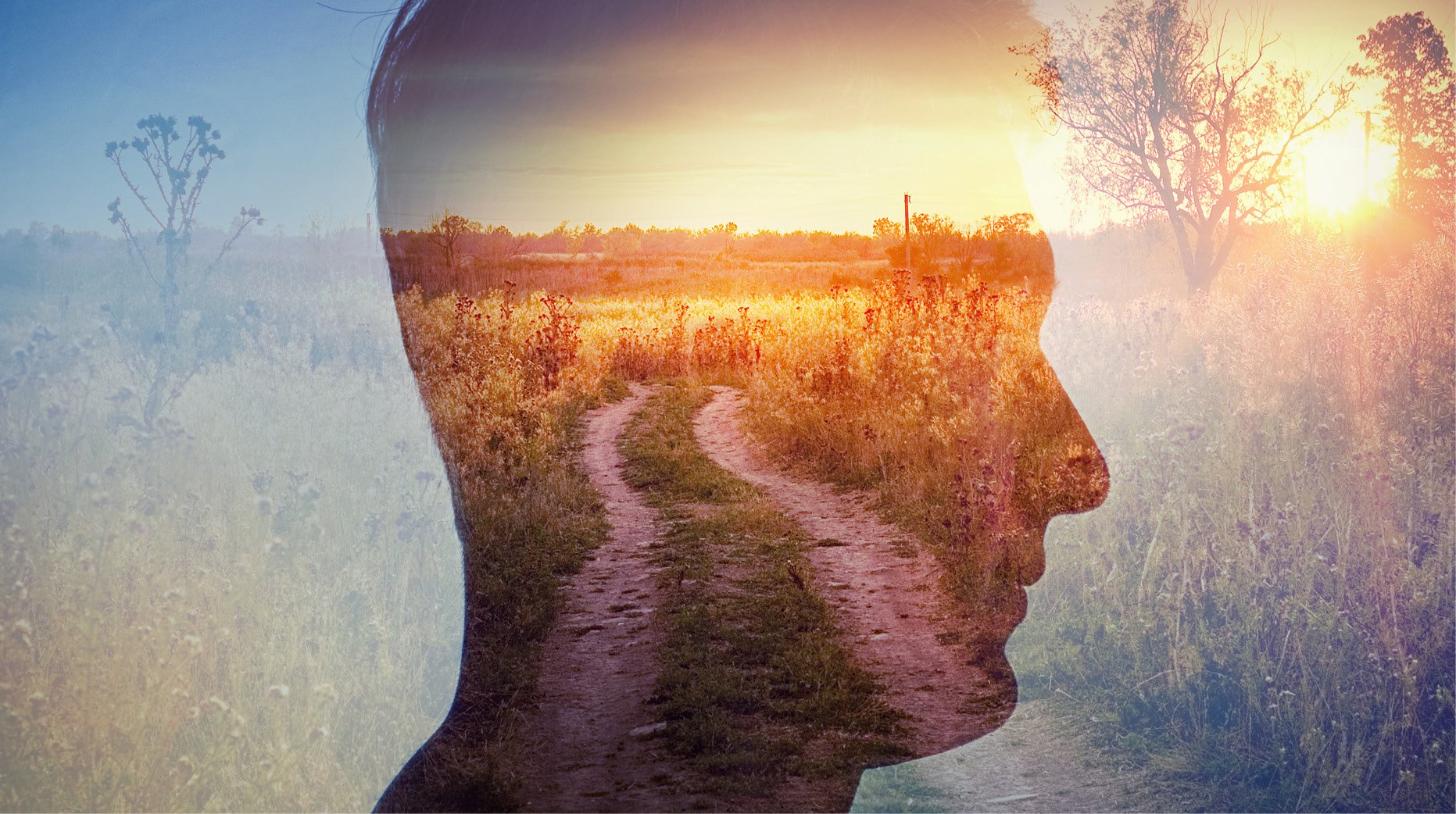 The Profound Effects of Nature on Brain Health5